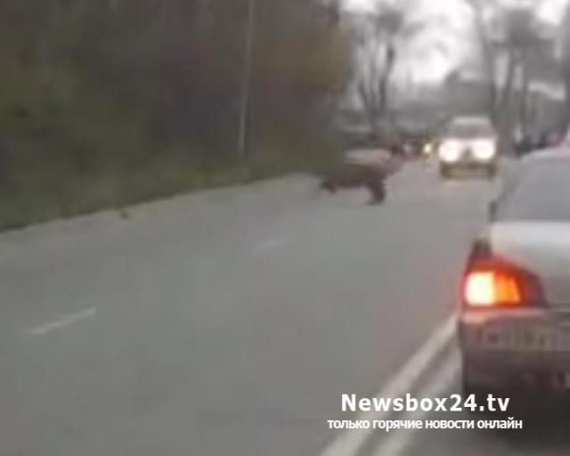 ВоВладивостоке тигра сняли навидео неподалеку от «Холодильника»